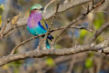 Very colorful roller.